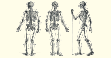 Изображение скелета